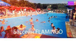 basseyn_flamingo_g.rezina.