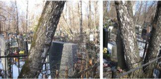 Деревья разрушают могилы