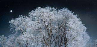 19 января 2020 - Всемирный день снега