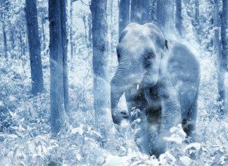 Слон насладился снегом