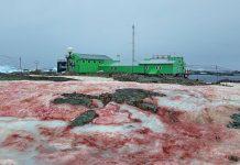 Снег красного цвета выпал в Антарктиде. Автор фото Андрей Зотов