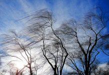 Порывистый ветер будет на протяжении всего дня