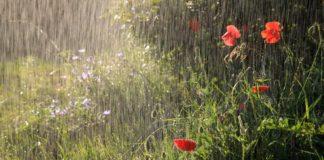 Майские праздники будут дождливыми