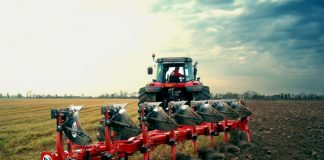 Землепользователи надеются на урожай кукурузы, подсолнечника и кормовых культур