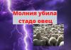 Молния убила стадо овец