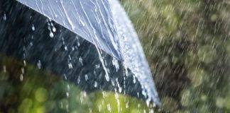 Синоптики предупредили о грозах, дожде и сильном ветре