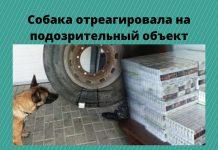 Собака, специализирующаяся на обнаружении табачных изделий, отреагировала на подозрительный объект. Использовано фото: point.md