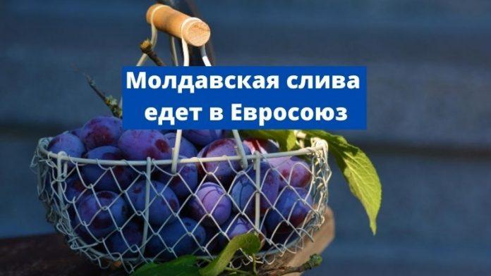 Молдавская слива едет в Евросоюз