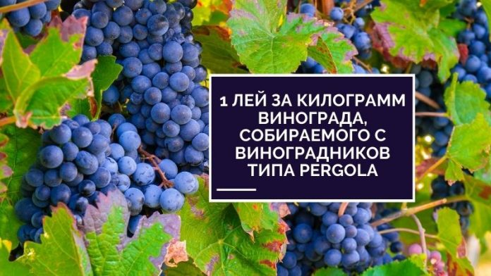 1 лей за килограмм винограда, собираемого с виноградников типа Pergola