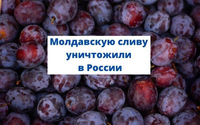 Молдавскую сливу уничтожили в России