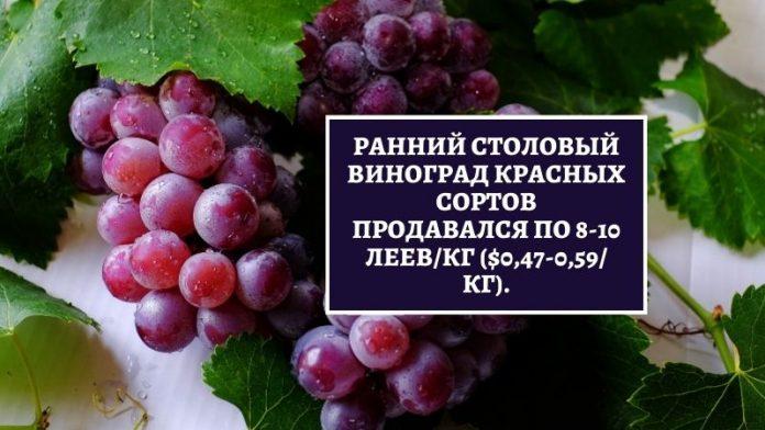 Ранний столовый виноград
