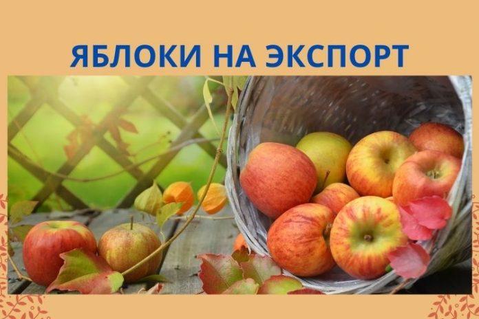 яблоки на экспорт