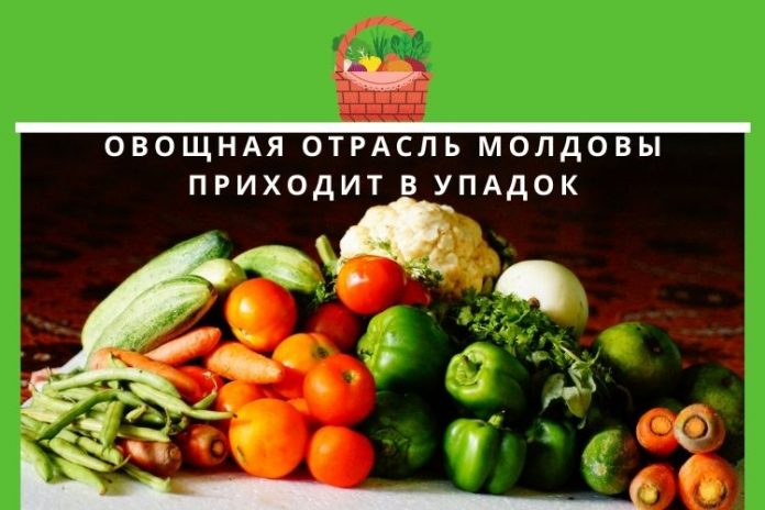 Овощная отрасль Молдовы приходит в упадок