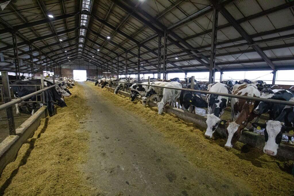 Ферма. Фото SPUTNIK _ MIHAI CARAUS
