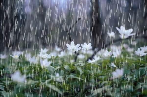 Погода: в Приднестровье дождливо