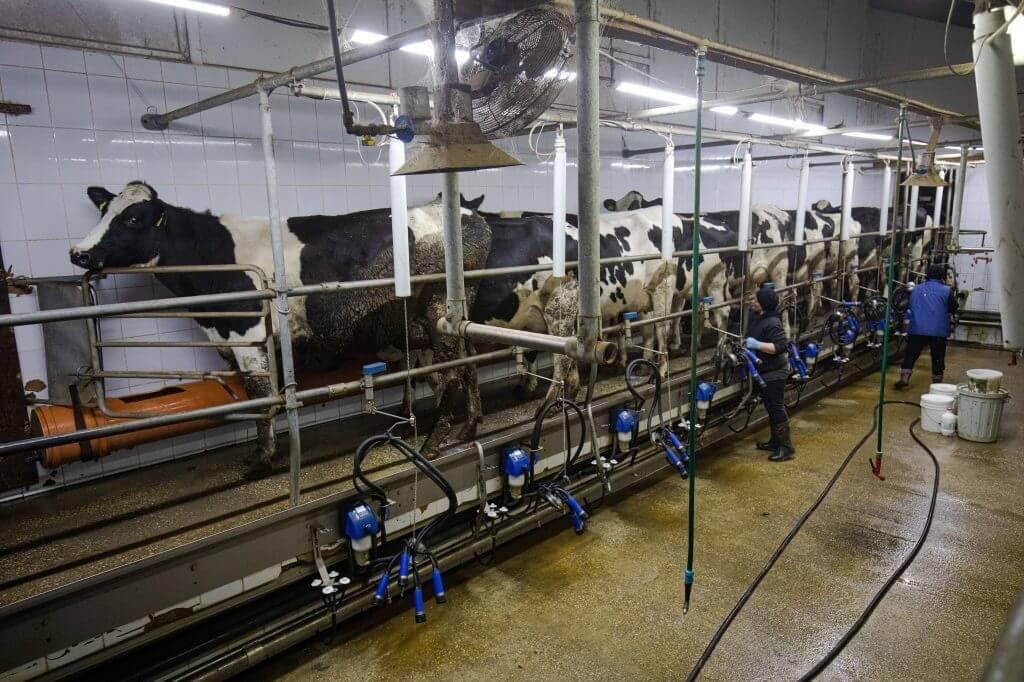 Полумеханизированная ферма. Фото SPUTNIK _ MIHAI CARAUS