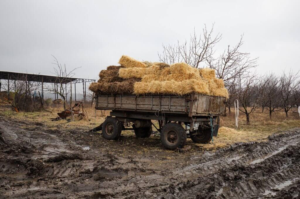 Работа на ферме. Фото SPUTNIK _ MIHAI CARAUS