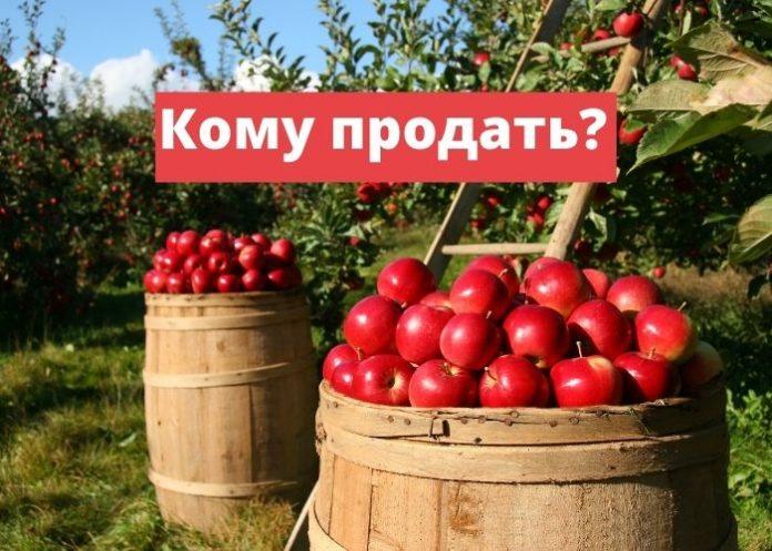 Кому продать яблоки